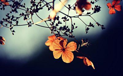 """RADIO RAI FVG: """"Neppure con un fiore"""""""